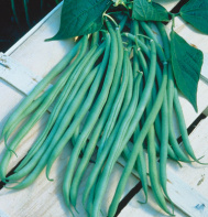 beans-pole