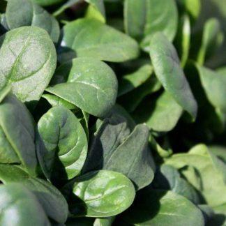 Caladonia Spinach