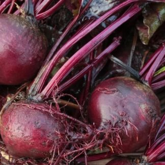 Bull's Blood Beets